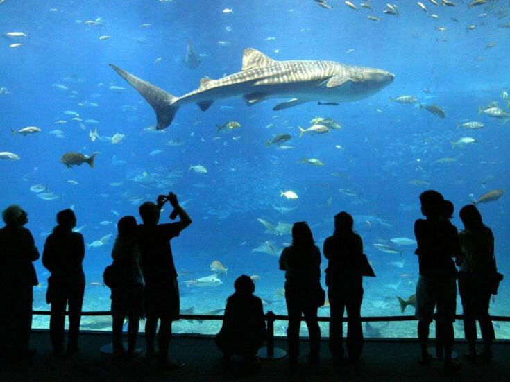 David Vann's unhappy families return in Aquarium