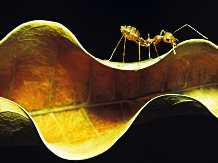 Mankind's inner ant: why humans swarm together