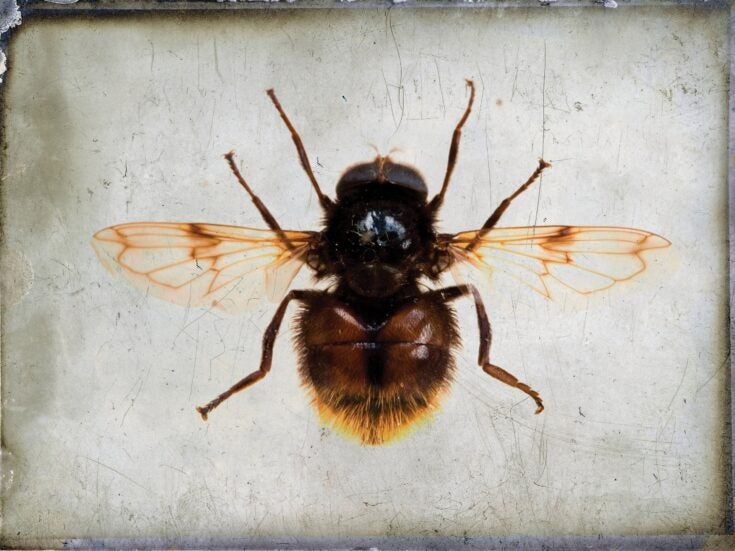 Why Donald Trump poses a significant threat to the welfare of bees