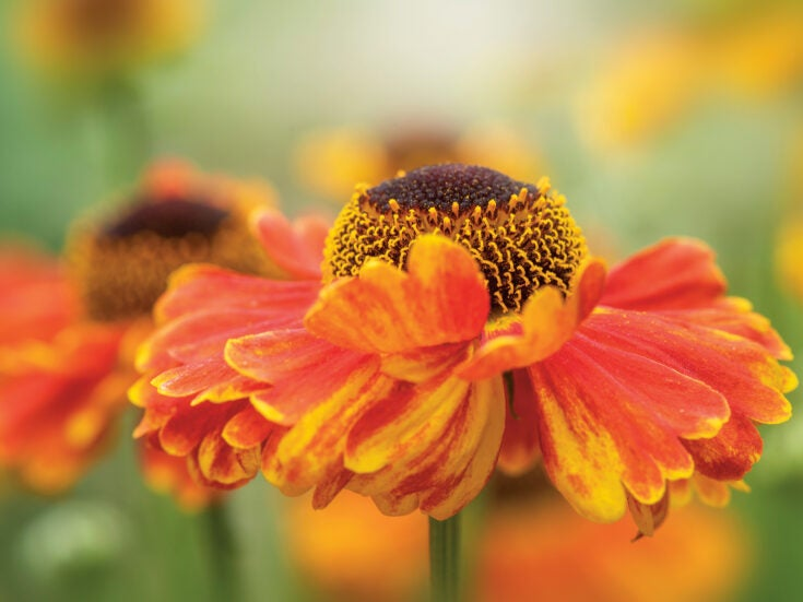 They might pass for humble flowers, but daisies are one of the largest of all plant families