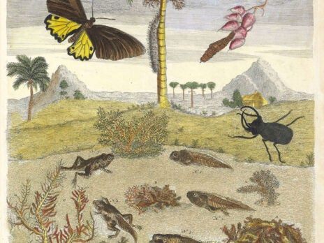 Maria Sibylla Merian's insect paintings
