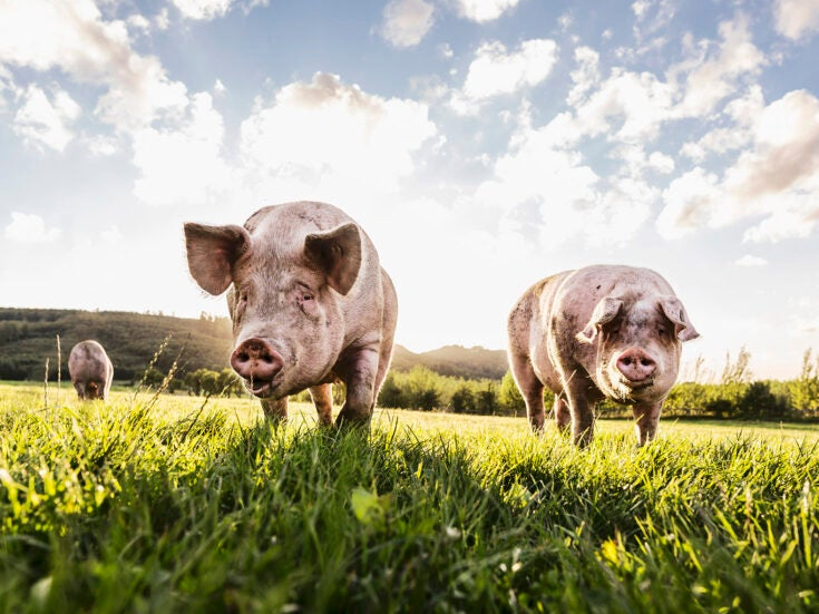 The politics of eating meat