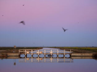 From the NS archive: The homing of sea-swallows