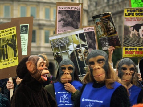 """Human supremacism: why are animal rights activists still the """"orphans of the left""""?"""