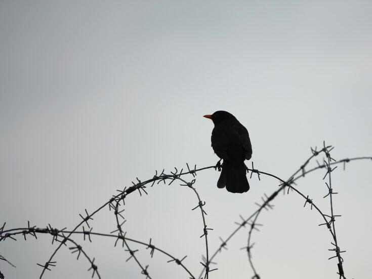 The Blackbird of Spitalfields