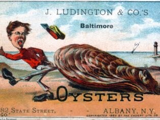 Consider the Oyster: why economics still has so much to learn from the natural world