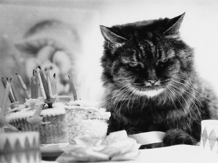 Ian Hislop's diary: As I turn 60 I have been the subject of several jokes, featuring both my cat and the Grim Reaper