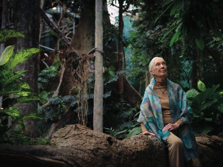 Jane Goodall's lucid optimism