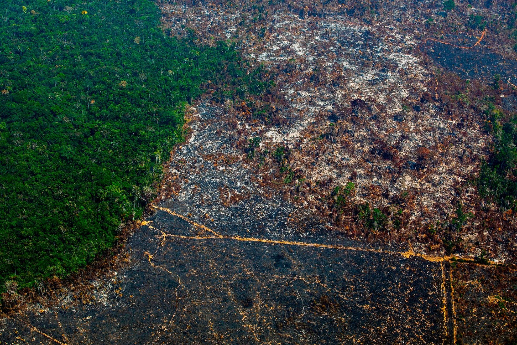 Why a UK law to criminalise deforestation won't save the Amazon